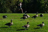 Ohio University junior Tyler Ames, of Cortland, Ohio, runs past a flock of Canada geese on the OU campus in Athens, Ohio, during the 2011 Ohio University Cross Country Invitational, Sept. 24, 2011. Ames went on to place third in the 8-kilometer race as the Bobcat men finished on top with 15 points.