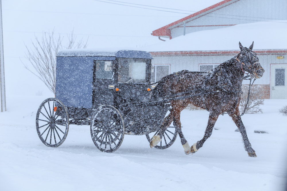 An Amish buggy travels through snow in Lancaster County, PA.