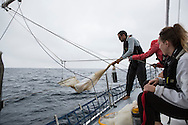 North Atlantic Ocean, September 2014.<br /> Skipper Eric Loss holds one of the trawls used to gather plankton's samples on board the Sea Dragon. &copy; Chiara Marina Grioni