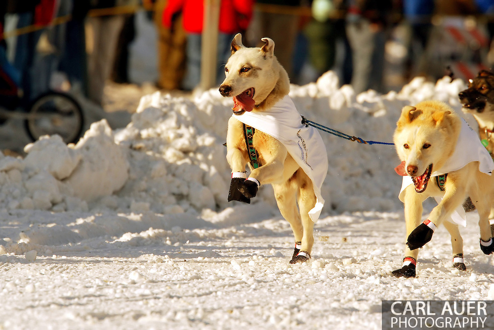 3/3/2007:  Anchorage Alaska - The lead dogs of rookie Jon Korta of Galena, AK takes to the air during the Ceremonial Start of the 35th Iditarod Sled Dog Race