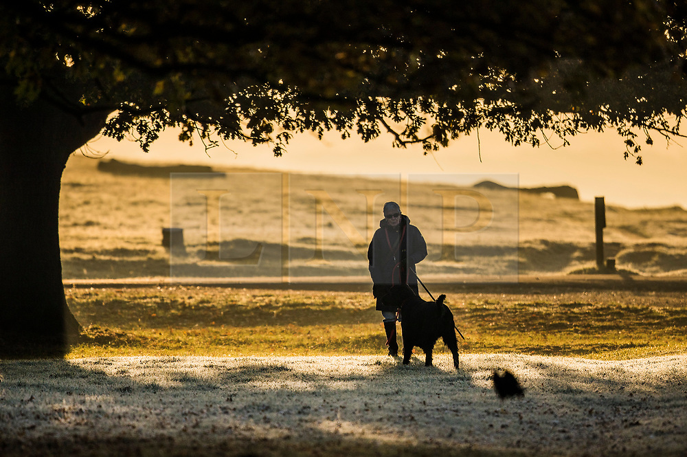 © Licensed to London News Pictures. 06/11/2017. London, UK.  A woman walks her dog as frost covers the grass in Richmond Park. Parts of the UK are experiencing freezing temperatures today. Photo credit: Peter Macdiarmid/LNP