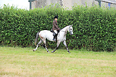 21 - Class 20 - Riding Horse Hunter Type