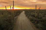 A road winds through the arid desert landscape in Saguaro National Park, Arizona.