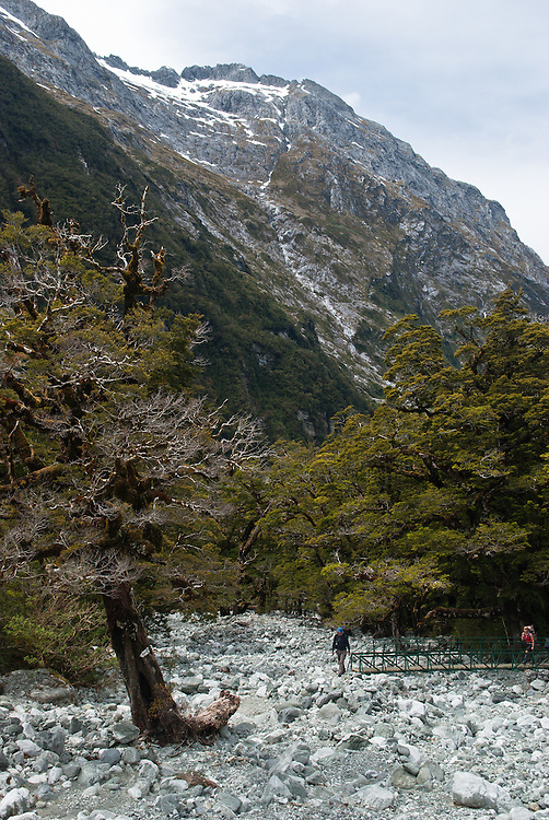 A rock avalanche of river boulders cut through the forest on the mountainside of Clifton Canyon, Milford Track, Fiordland, New Zealand, Fiordland, New Zealand