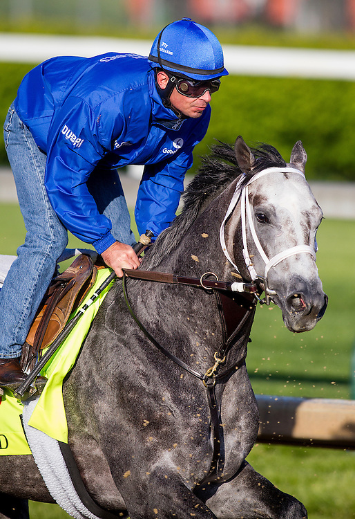 April 29, 2015: Frosted gallops in preparation for the Kentucky Derby at Churchill Downs Louisville Ky. Alex Evers/ESW/CSM