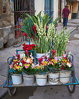 Flower Cart. Morning Walkabout in Old Havana. Image taken with a Leica T camera and 23 mm f/2 camera.