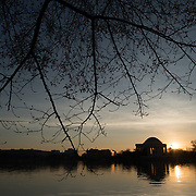 WASHINGTON DC--The branches of the famous cherry trees around the Tidal Basin before their spring bloom. The Jefferson Memorial is in the background.
