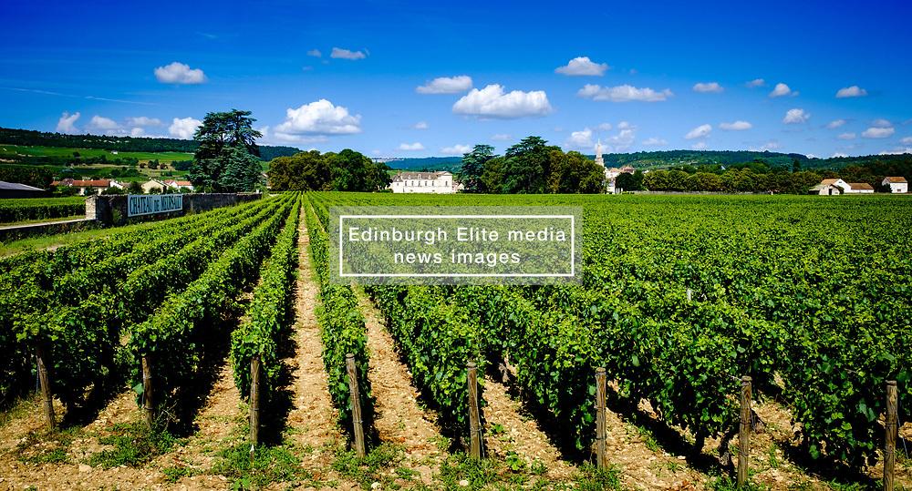 Vineyard near Beaune, Burgundy, France in summer<br /> <br /> (c) Andrew Wilson | Edinburgh Elite media