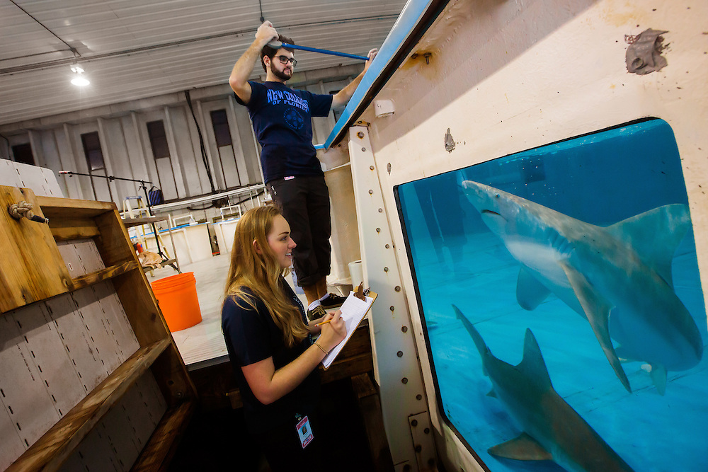 SARASOTA, FL  - January 23, 2015 -- Andrew New College of Florida students do research on sharks at Mote Marine Laboratory in Sarasota.  (PHOTO / CHIP LITHERLAND)