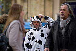 © Licensed to London News Pictures. 14/02/2013. London, UK. A member of a four piece 'cow' choir pulls a face as they serenade commuters with cow orientated songs as to promote the 'Supporting Better Dairy' campaign in Victoria Station, London, today (14/02/2013). The campaign, supported by ice cream company Ben and Jerry's, aims to improve the welfare standards for dairy cows in Europe. Photo credit: Matt Cetti-Roberts/LNP