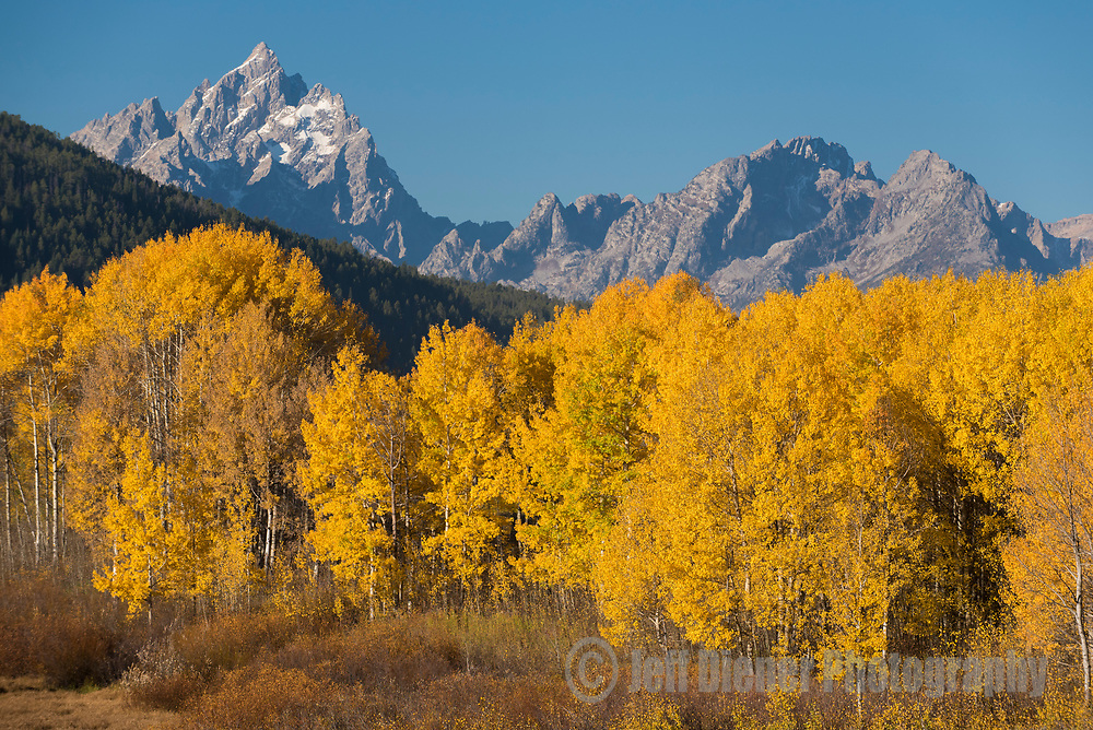 The Cathedral Group towers above aspens in Grand Teton National Park, Jackson Hole, Wyoming