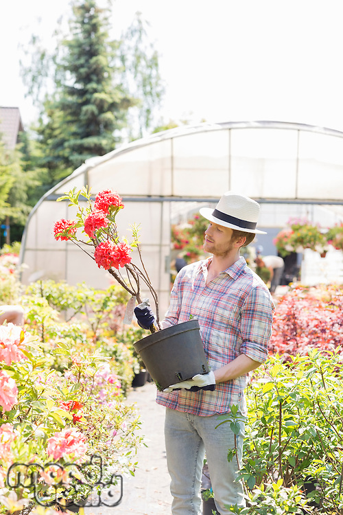 Male gardener looking at flower pot outside greenhouse