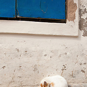 Cat sleeping on the sidewalk in Essouaria, Morocco
