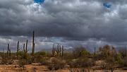 Landscape close to Organ Pipe National Monument, southern Arizona, USA
