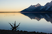 Birds brush the surface of Jackson Lake in Grand Teton National Park in late Fall.<br /> <br /> Photo by David Stubbs