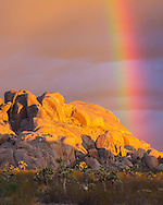 When the sun rose at Joshua Tree National Park, a vivid rainbow appeared. The rainbow was almost at a 90 degree angle to the ground. This can only happen right at sunrise or sunset.<br /> <br /> Date Taken: August 20, 2014