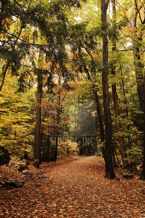 forest path during autumn