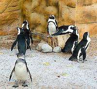 Penguins at The New Jersey State Aquarium