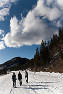 A group of walkers begin a trek through the rural wilderness of Calgary on a sunny winters day.