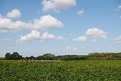 The peloton approach through the fields at Boels Ladies Tour 2018 - Stage 5, a 159.7km road race in Sittard, Netherlands on September 1, 2018. Photo by Sean Robinson/velofocus.com