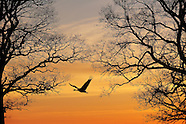 Crane and swan, Sweden