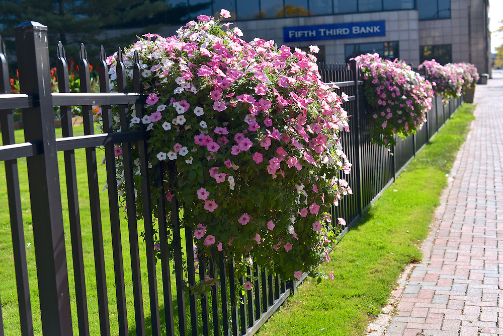 Hanging flower baskets on a downtown fence.