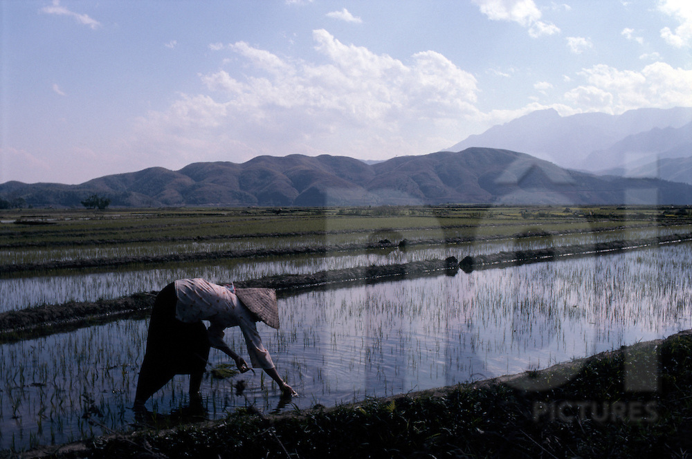 Vietnamese farmer in rice field. Area of Binh Lu close from Sapa