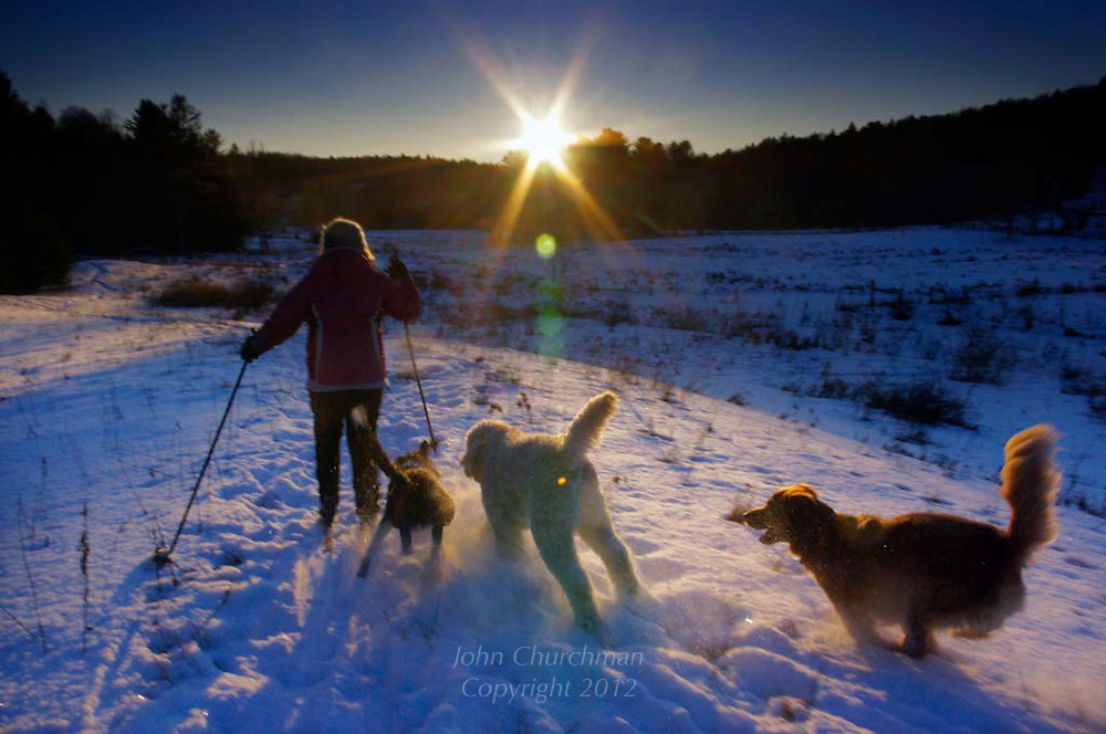 late cross country skiing with dogs