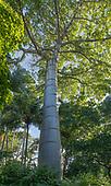 Hawai'i Wondrous Trees