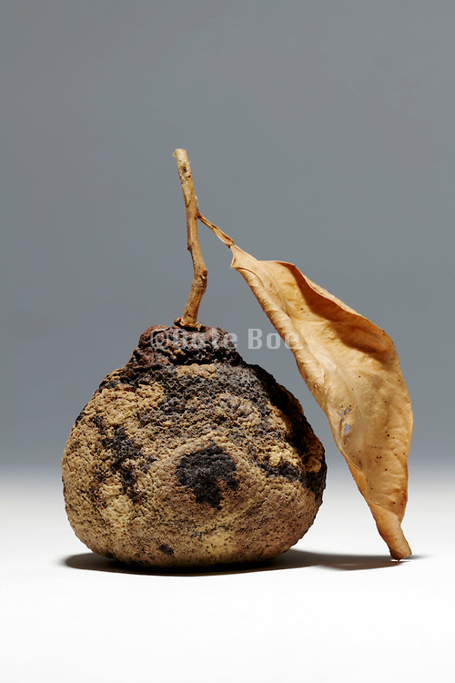 dried up pear