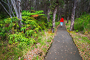 Hiker on the untouched portion of the Devastation Trail, Hawaii Volcanoes National Park, Hawaii USA
