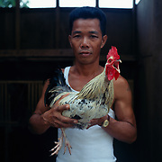 THE PHILIPPINES (Boracay). 2009. Boy Silba, 40, with his game cock before the cockfighting at the Boracay Cockpit, Boracay Island. Photo Tim Clayton <br /> <br /> Cockfighting, or Sabong as it is know in the Philippines is big business, a multi billion dollar industry, overshadowing Basketball as the number one sport in the country. It is estimated over 5 million Roosters will fight in the smalltime pits and full-blown arenas in a calendar year. TV stations are devoted to the sport where fights can be seen every night of the week while The Philippine economy benefits by more than $1 billion a year from breeding farms employment, selling feed and drugs and of course betting on the fights...As one of the worlds oldest spectator sports dating back 6000 years in Persia (now Iran) and first mentioned in fourth century Greek Texts. It is still practiced in many countries today, particularly in south and Central America and parts of Asia. Cockfighting is now illegal in the USA after Louisiana becoming the final state to outlaw cockfighting in August this year. This has led to an influx of American breeders into the Philippines with these breeders supplying most of the best fighting cocks, with prices for quality blood lines selling from PHP 8000 pesos (US $160) to as high as PHP 120,000 Pesos (US $2400)..