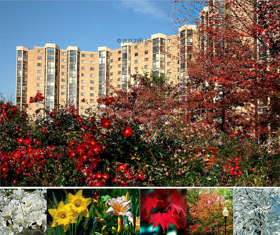 Collage of seasonal blooms at Montebello Condominium, Alexandria, VA
