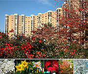 Collage of seasonal blooms at Montebello Condominium, Alexandria, VA
