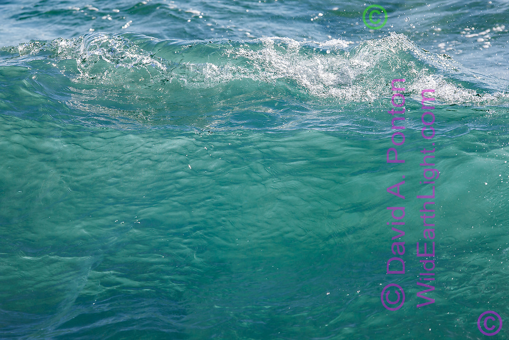 Clear, clean water in a breaking wave has a crystalline appearance of the top edge. Kauai, © 2010 David A. Ponton