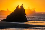 Bird on rock and crashing waves at sunset on Bandon Beach, Bandon, Oregon
