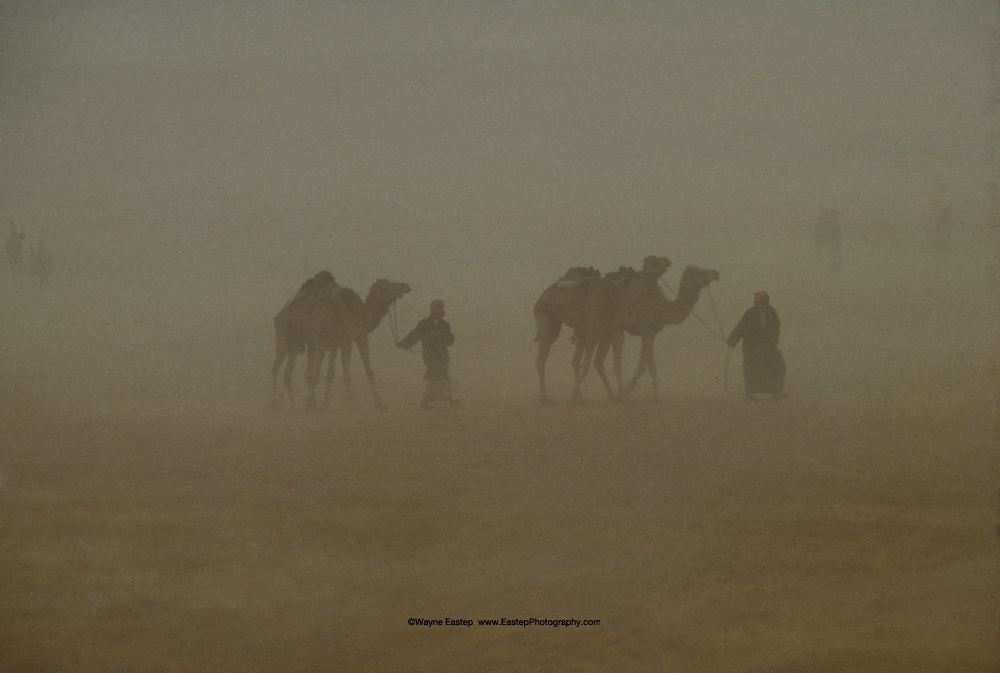 Bedouin men and camels in a sandstorm near Jinayderiah camel market, Saudi Arabia