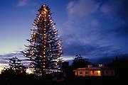 Christmas, Puuopelu, Parker Ranch House, Waimea, Kamuela, Kohala, Island of Hawaii
