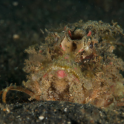Dive Spot: TK II