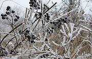 Snow-covered Weinweg (path through vineyard) in a Viennese winter.