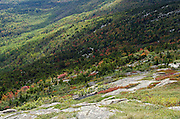 Fall foliage turning red and orange amid evergreen forests, Cadillac Mountain, Acadia National Park, Maine.