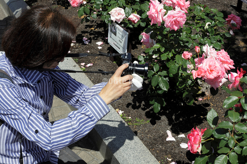 woman taking a picture of roses