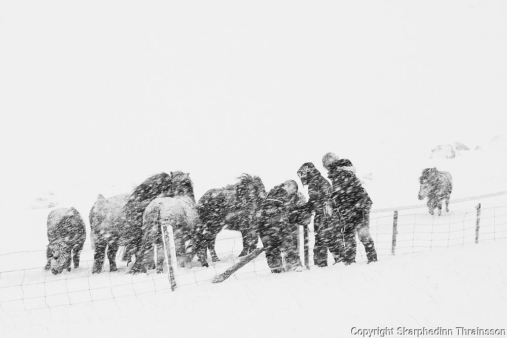 Farmers in a snowstorm