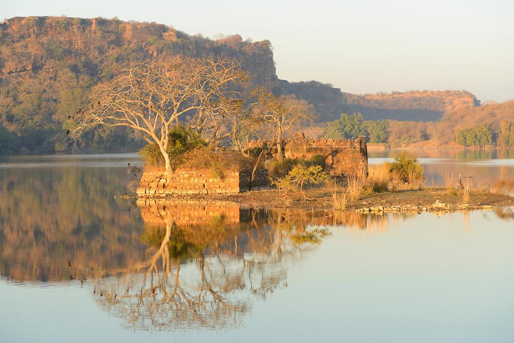 Ranthambore National Park or Ranthambhore, Rajasthan,India,Asia