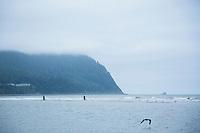 Razor clamming. Seaside, Oregon