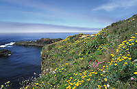 Wildflowers on the Pacific Coast of Northern California, Mendocino County.
