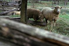 SHEEP/GOATS