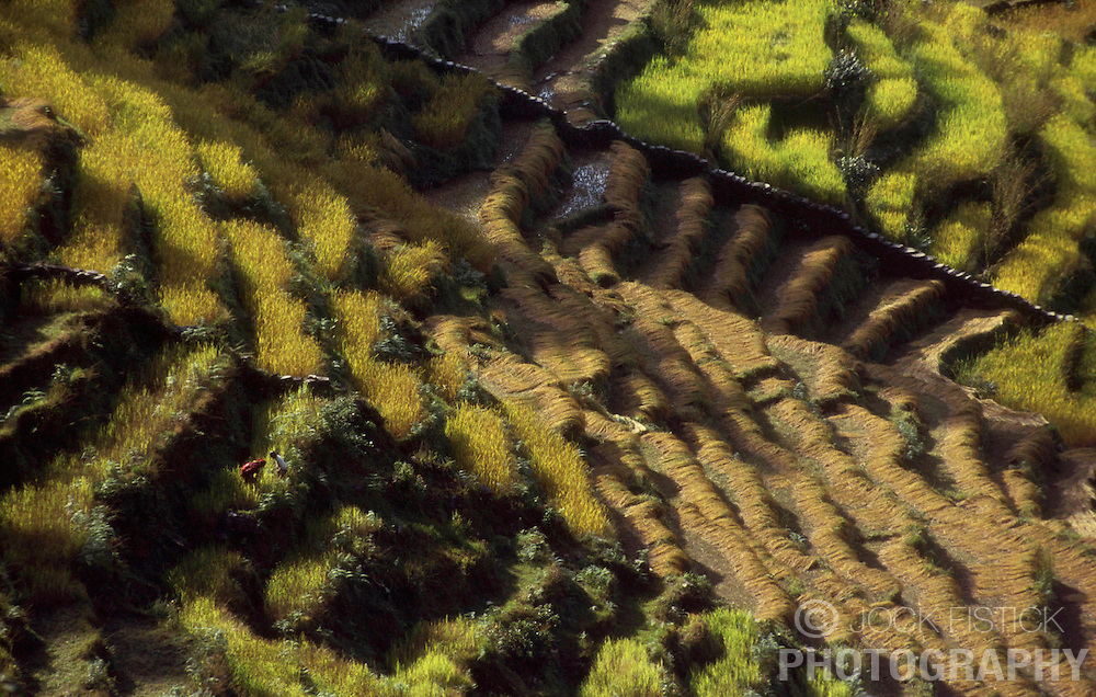 KATHMANDU, NEPAL - OCTOBER 1992 - <br />The ecomomy of Nepal relies on agriculture with most of its workforce growing sugarcane, rice, maize, wheat, potatoes, vegetables, and tobacco in the lowlands.(PHOTO &copy; JOCK FISTICK)