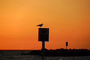 silhouette of a seagull at sunset. Photographed on the Mediterranean beach, Tel Aviv, Israel