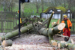 © Licensed to London News Pictures. 12/03/2019. London, UK. A tree has fallen on Green Lanes in Haringey, North London due to strong winds. Green Lanes is closed between Manor House underground station and Endymion Road. Met Office is warning to prepare for rain and 80mph gales as Storm Gareth hits later today bringing the risk of heavy flooding. Photo credit: Dinendra Haria/LNP